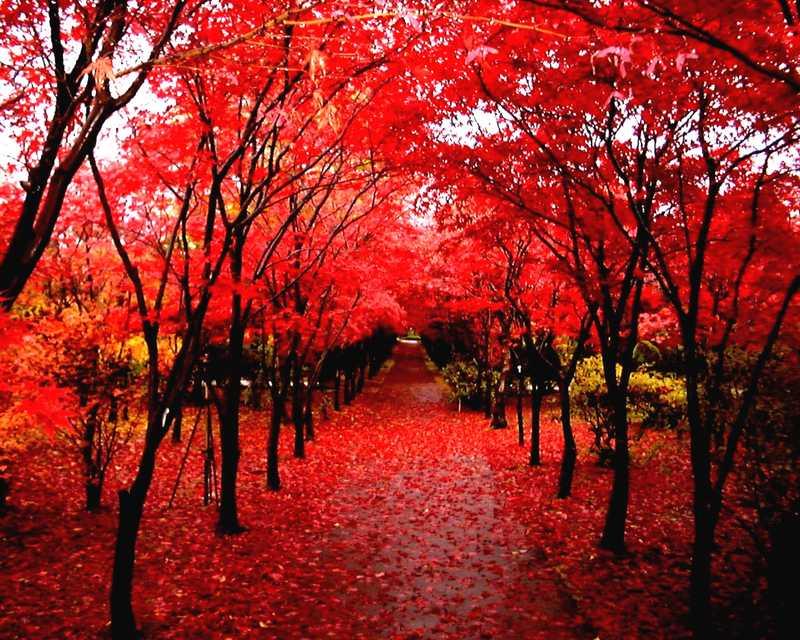 札幌市緑化植物園平岡樹芸センター