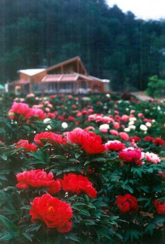 花と泉の公園・ぼたん園