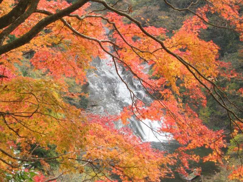 県立養老渓谷奥清澄自然公園の画像