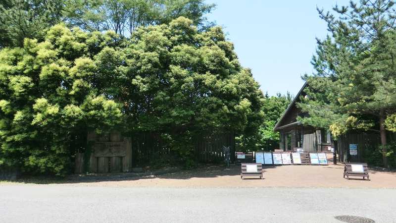 千葉県立中央博物館生態園