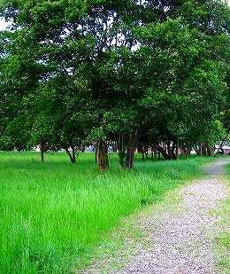 有吉貝塚公園