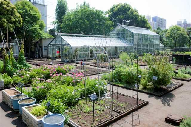星薬科大学薬用植物園