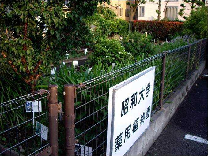 昭和大学薬学部薬用植物園旗の台薬草園
