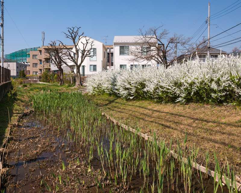 丸子川親水公園