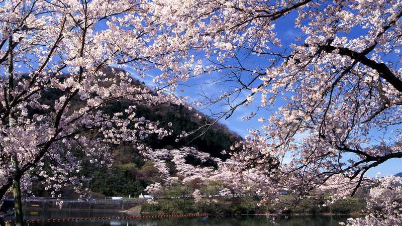 神奈川県立津久井湖城山公園