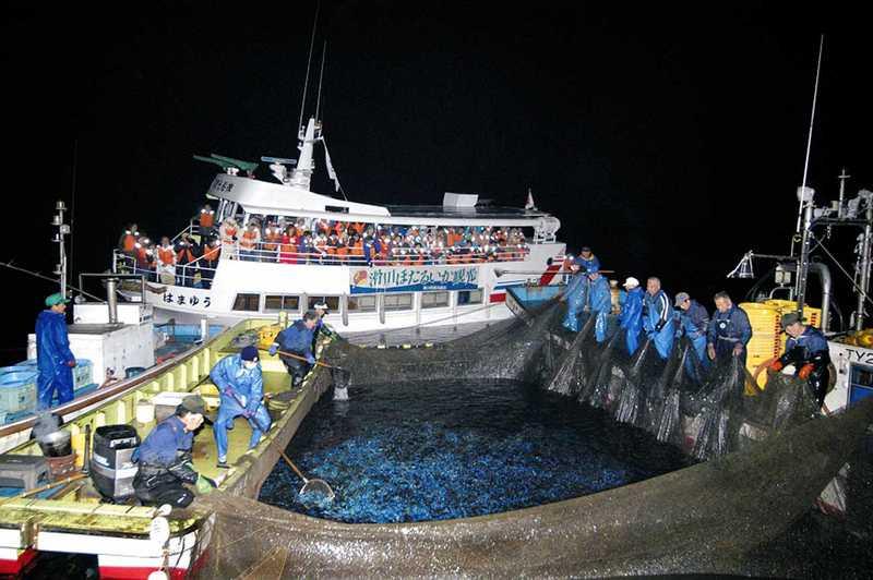 ホタルイカ海上観光