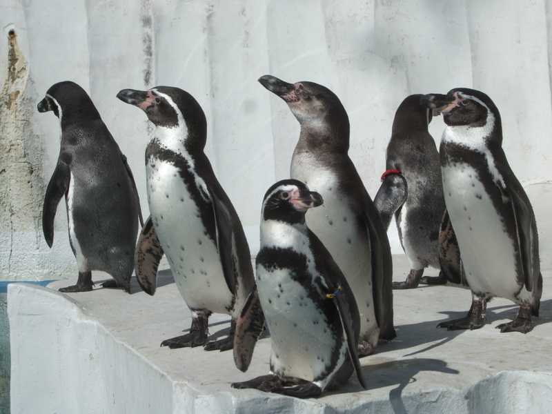 飯田市立動物園