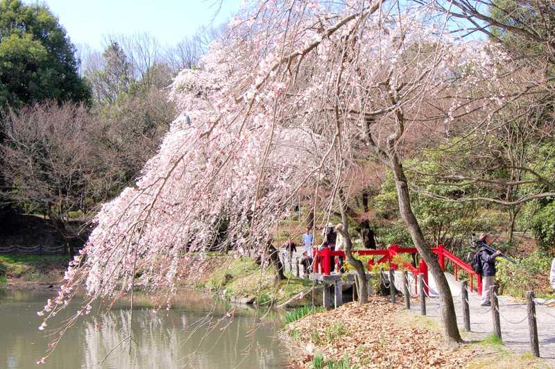 愛知県森林公園の画像