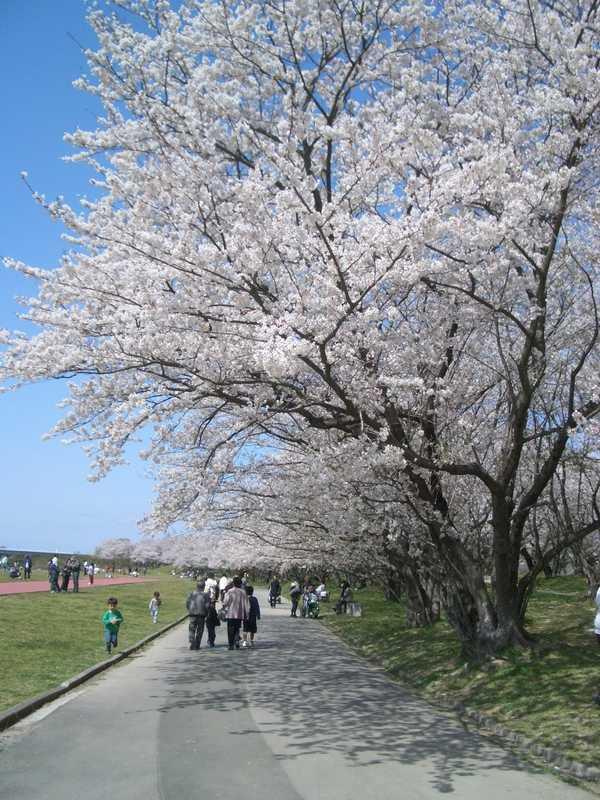 宮川堤公園