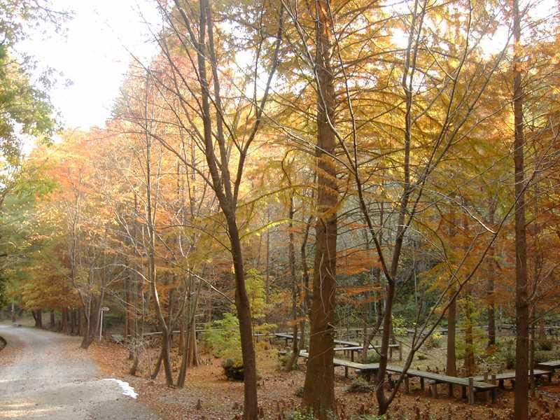 府民の森くろんど園地
