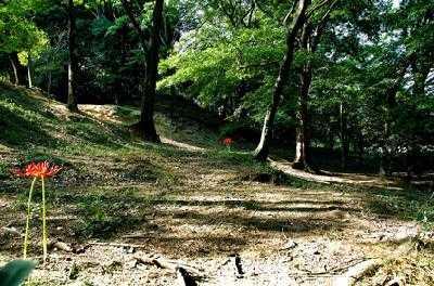 城山古墳史跡公園周濠花菖蒲園