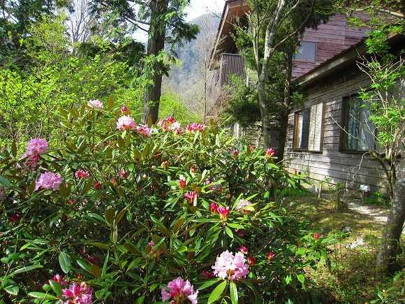 四国山岳植物園岳人の森キャンプ場