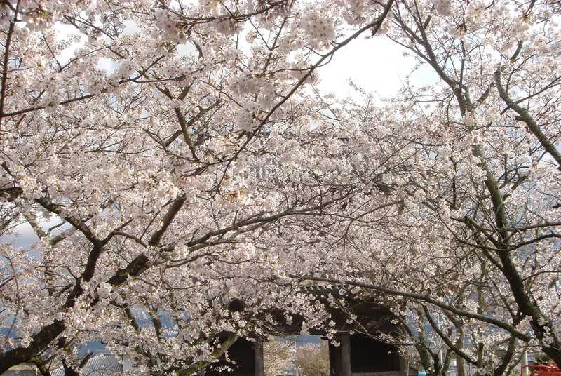 熊谷寺(第8番札所)