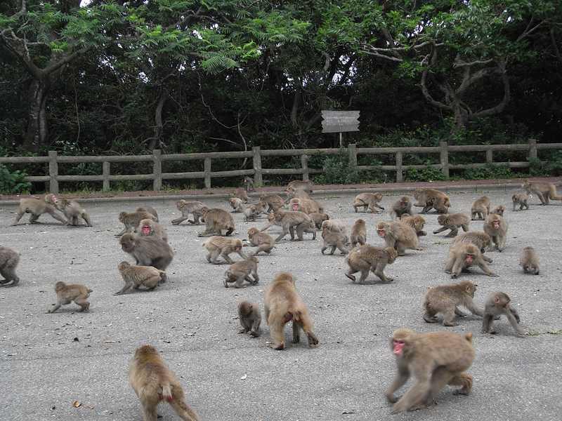 大堂お猿公園