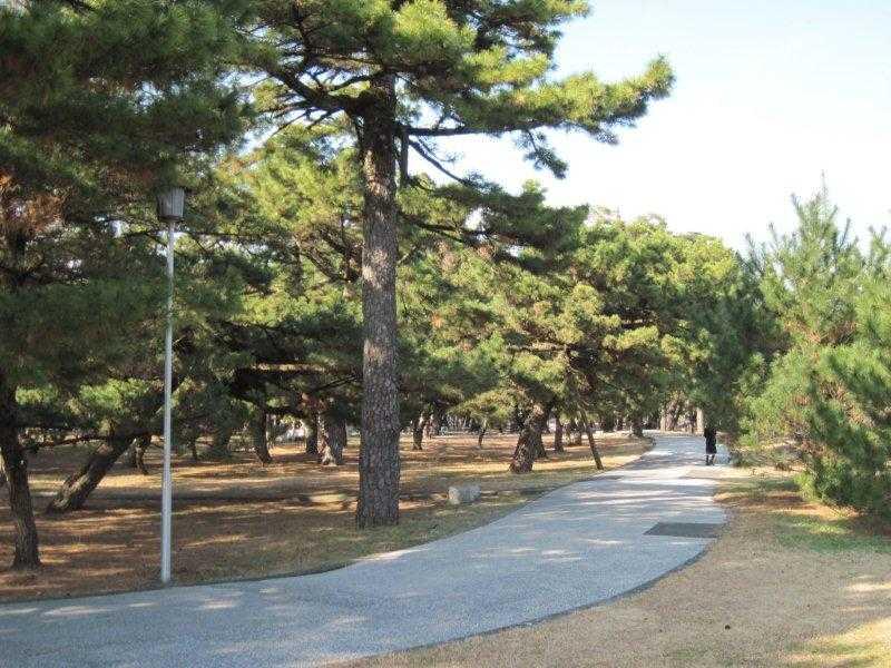 高知県立種崎千松公園のキャンプ場
