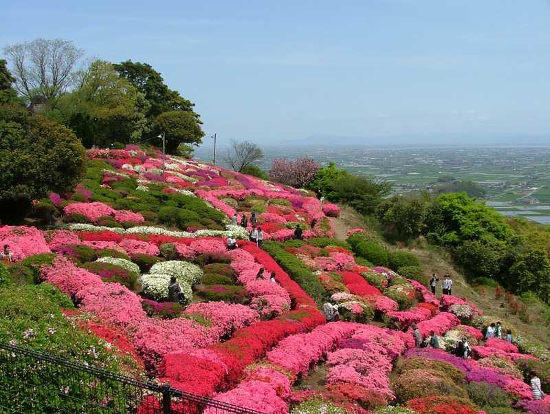 歌垣公園の画像