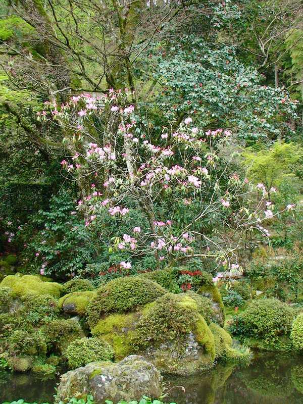 伝来寺庭園