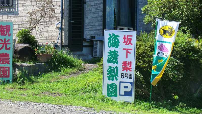 6号園海蔵初明梨園の画像