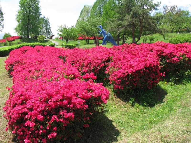 長野市茶臼山自然植物園