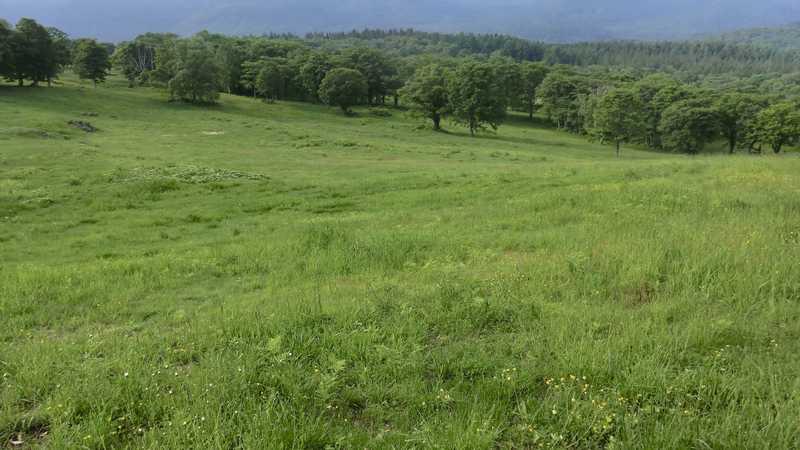 新潟県笹ヶ峰放牧場