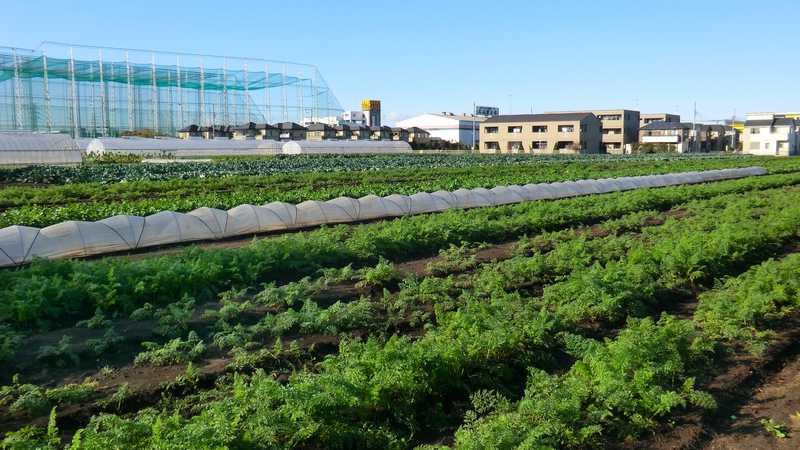 サニー農園
