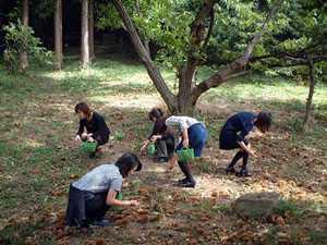 花山観光園
