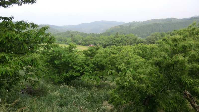 井手野観光栗園