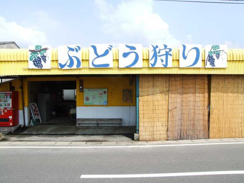 横田上観光ぶどう園