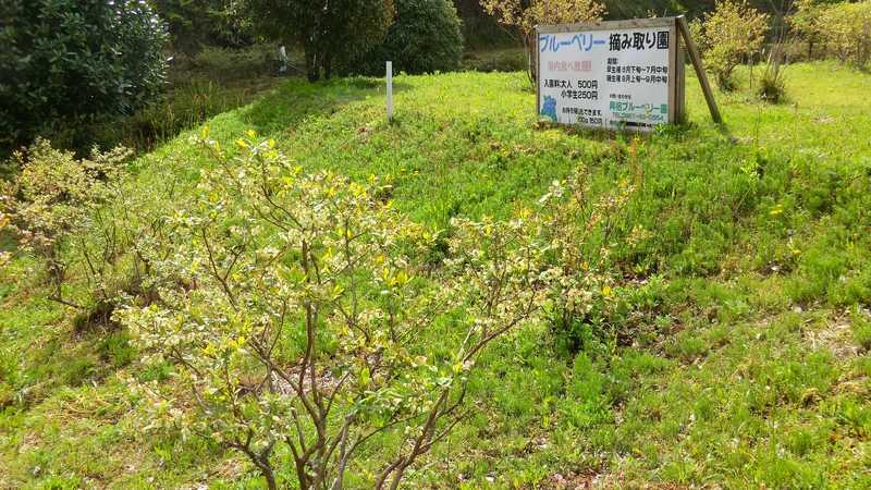 興梠ブルーベリー園