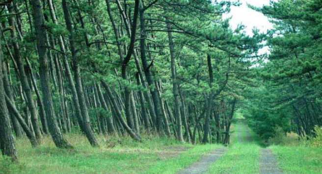 後谷地国有林