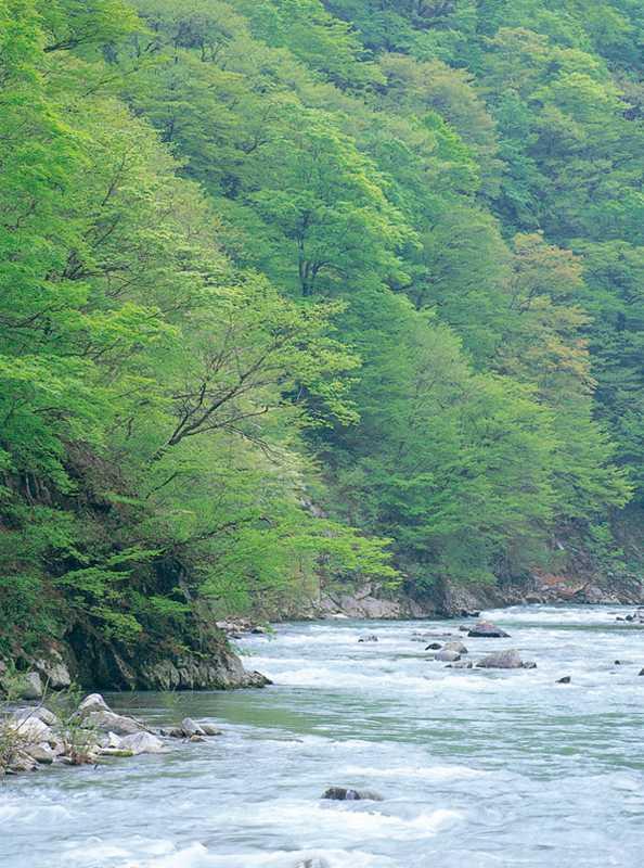 赤石川渓流