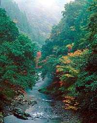 紅葉川渓谷