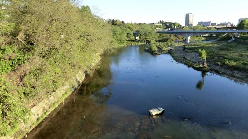 広瀬川のカジカガエルと野鳥