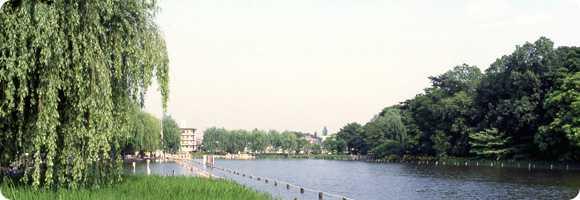三宝寺池の鳥と水と樹々の音