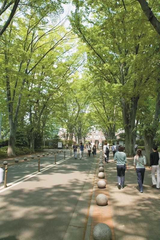成蹊学園ケヤキ並木