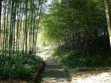 京の竹林5