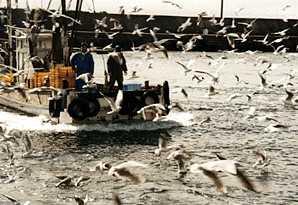 垂水漁港のイカナゴ漁