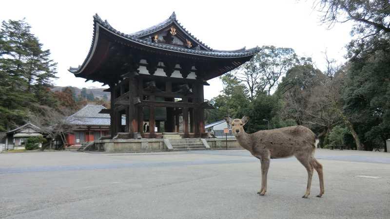 春日野の鹿と諸寺の鐘2