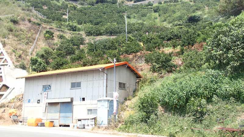 吉田町観光協会指定みかん狩清家農園