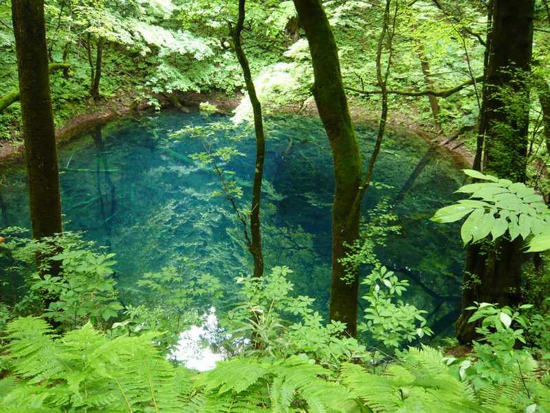 十二湖自然休養林
