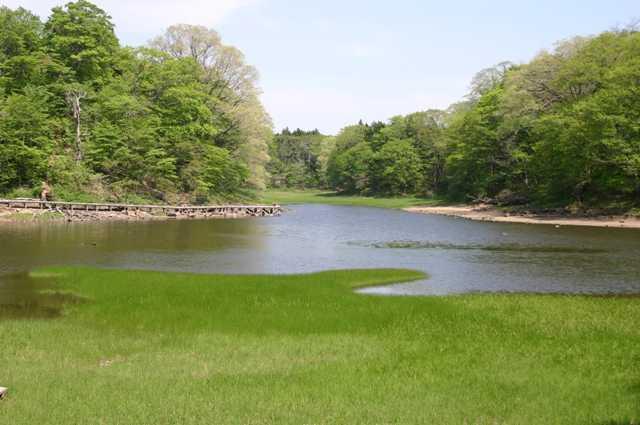 大沼の森の画像
