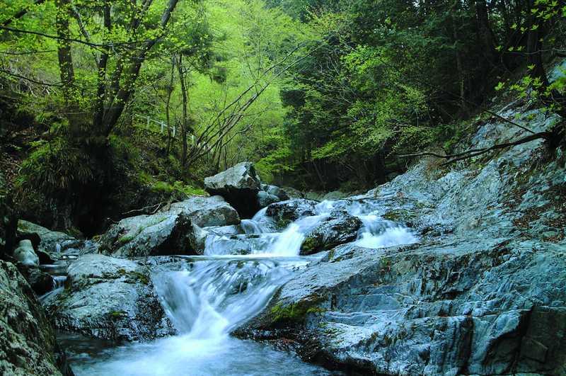 桐生川源流林