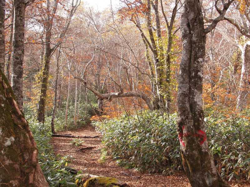武尊自然休養林