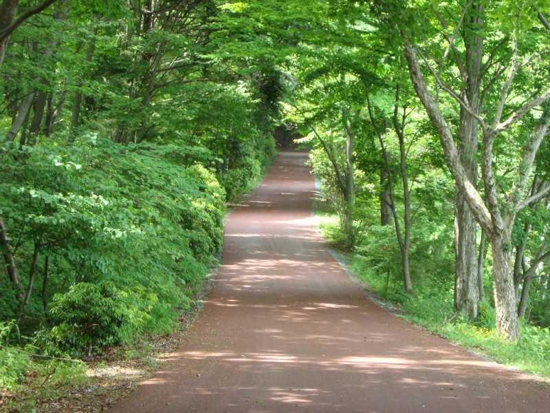 埼玉県県民の森