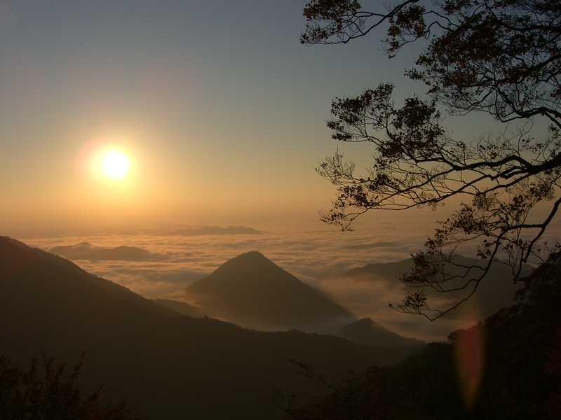 大江山の森