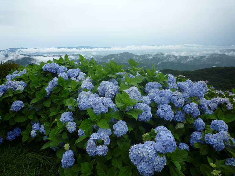 大川原生活環境保全林
