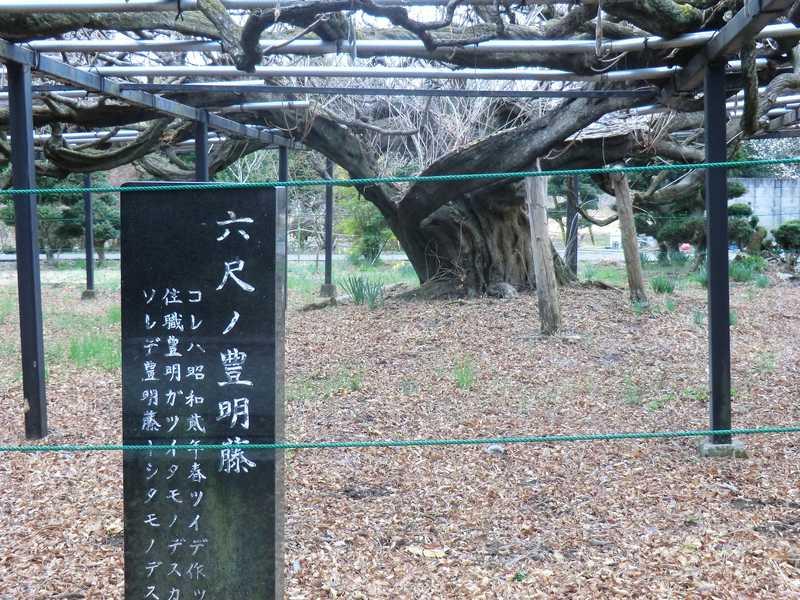 今市竜蔵寺の藤と線香