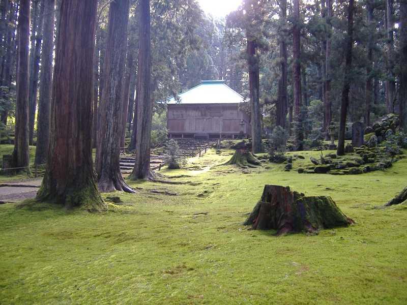 白山神社境内菩堤林の杉と蘇苔