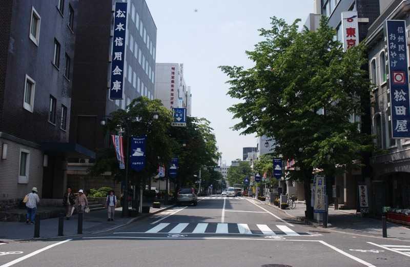 松本大名町通りのシナノキ