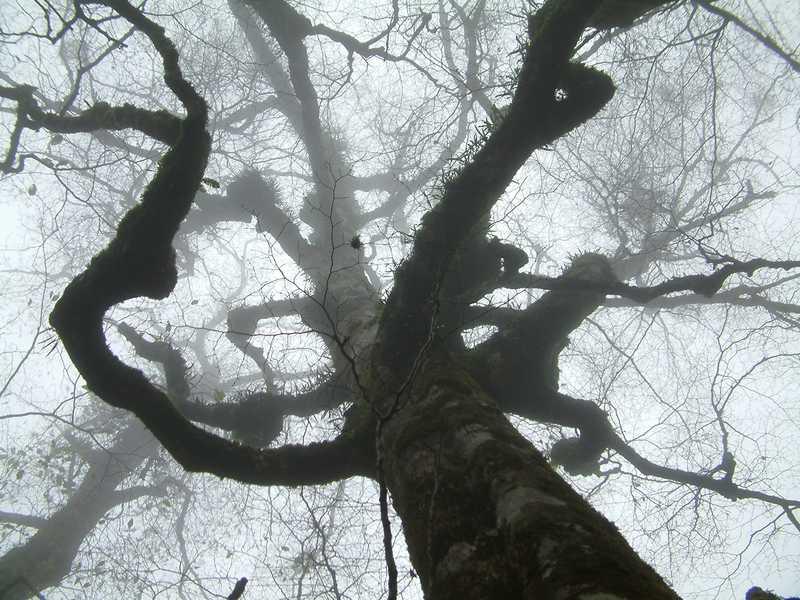 大台ヶ原のブナの原生林